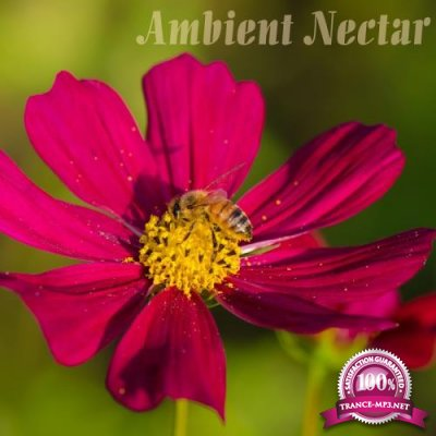 Ambient Nectar (2017)